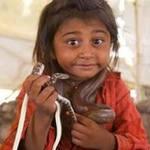 Tin tức trong ngày - Trẻ vầy rắn hổ chúa: Chuyện nhỏ ở Ấn Độ