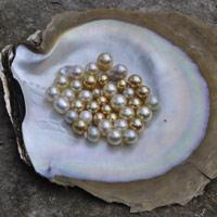 Ngọc trai biển có bao nhiêu loại? (Kỳ 2)