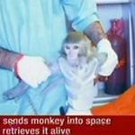 Tin tức trong ngày - Iran đưa khỉ lên vũ trụ thành công