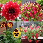 Bạn trẻ - Cuộc sống - Những ban công rực rỡ sắc hoa