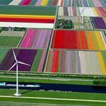 Du lịch - Đồng hoa tulip nhìn từ trên cao đẹp mê hồn