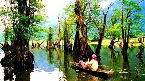 Rừng cây ở Hà Giang vào top 6 khu rừng đẹp nhất - 1