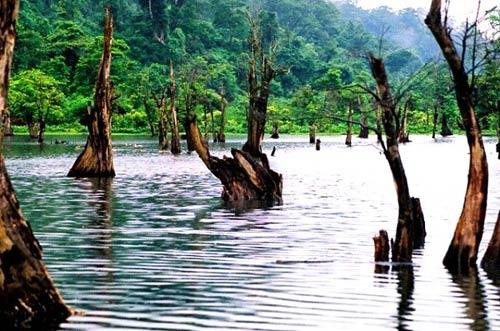 Rừng cây ở Hà Giang vào top 6 khu rừng đẹp nhất - 2