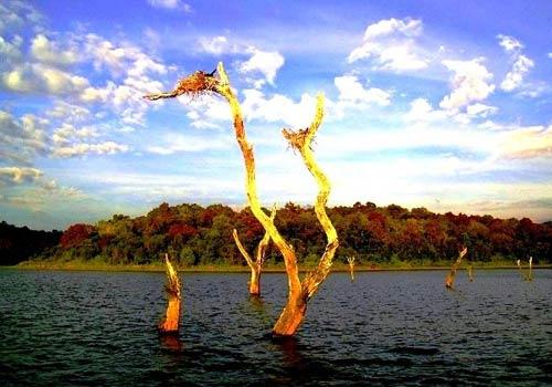 Rừng cây ở Hà Giang vào top 6 khu rừng đẹp nhất - 6