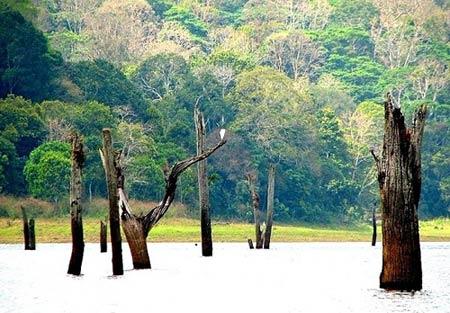 Rừng cây ở Hà Giang vào top 6 khu rừng đẹp nhất - 7