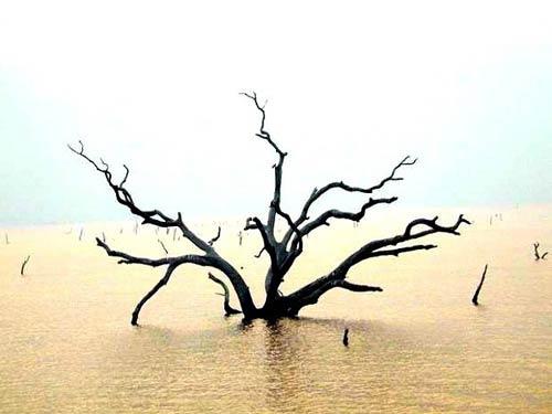 Rừng cây ở Hà Giang vào top 6 khu rừng đẹp nhất - 9