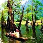 Du lịch - Rừng cây ở Hà Giang vào top 6 khu rừng đẹp nhất