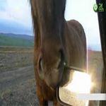 Video Clip Cười - Top clip những tình huống hài