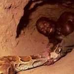Tin tức trong ngày - Tay không săn trăn khổng lồ ở Cameroon