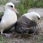 """Phi thường - kỳ quặc - Bất ngờ về """"cụ"""" chim già nhất thế giới"""