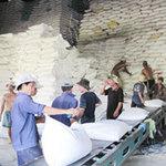 Thị trường - Tiêu dùng - Xuất khẩu gạo bị cạnh tranh khốc liệt