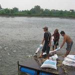 Thị trường - Tiêu dùng - Thủy sản khốn khổ vì thức ăn FDI