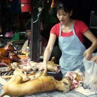 Chuyện lạ: Đầu xuân, cả làng ăn thịt chó