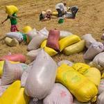 Thị trường - Tiêu dùng - Tạm trữ lúa gạo: Chủ yếu bán qua thương lái