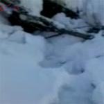 Tin tức trong ngày - Quay được hình ảnh Người tuyết ở Nga