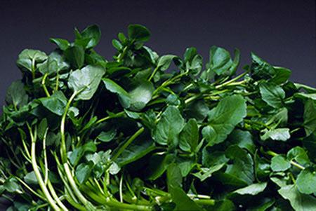 Ăn loại rau cải nào tốt cho sức khỏe? - 2