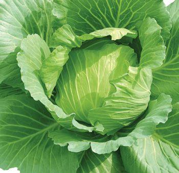 Ăn loại rau cải nào tốt cho sức khỏe? - 3
