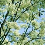 Du lịch - Đi 'săn' hoa nở tuyệt đẹp khắp miền Bắc