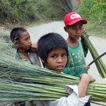Giáo dục - du học - Bỏ học vào rừng chặt đót