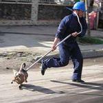 Tin tức trong ngày - Thả rông chó: Không thể cứ đè ra phạt
