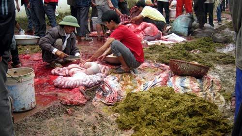 Hãi hùng thịt trâu chọi Hải Lựu - 4