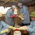 Dự trữ 40 triệu liều vắcxin phòng cúm gia cầm