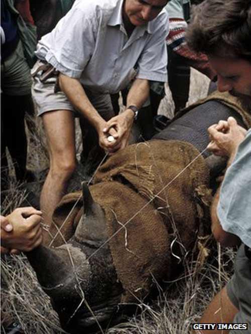 Đề xuất hợp pháp hóa buôn bán sừng tê giác - 1