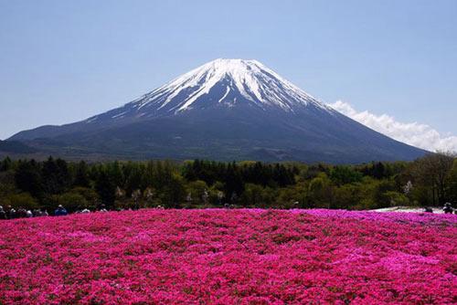 Thảm hoa tráng lệ ở Nhật - 4