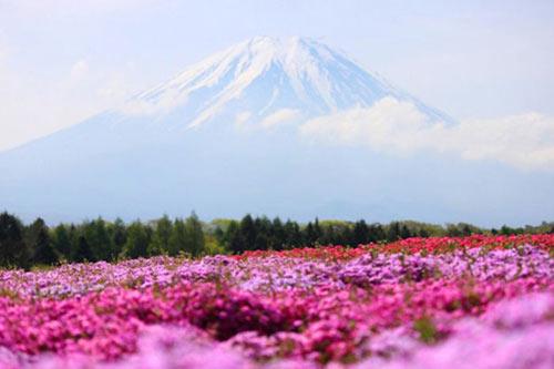 Thảm hoa tráng lệ ở Nhật - 5