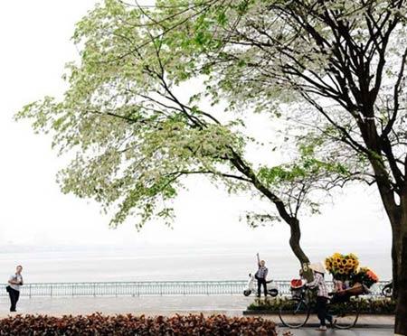 5 địa điểm chụp ảnh mùa xuân tuyệt đẹp ở Hà Nội - 2