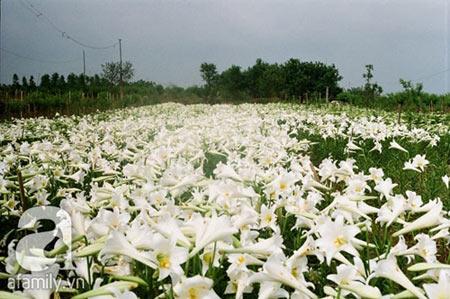 5 địa điểm chụp ảnh mùa xuân tuyệt đẹp ở Hà Nội - 8