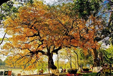 5 địa điểm chụp ảnh mùa xuân tuyệt đẹp ở Hà Nội - 11