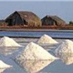 Thị trường - Tiêu dùng - Giá muối tăng cao, diêm dân đổ ra đồng