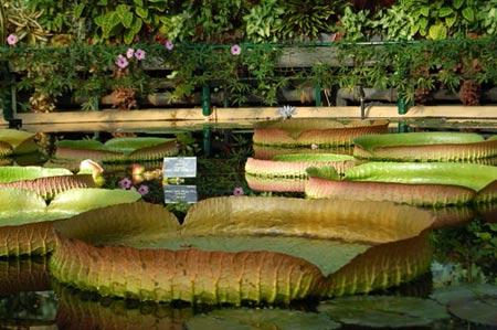 Mướt mắt vẻ đẹp 8 khu vườn nổi tiếng - 6
