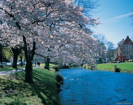 Mướt mắt vẻ đẹp 8 khu vườn nổi tiếng - 13
