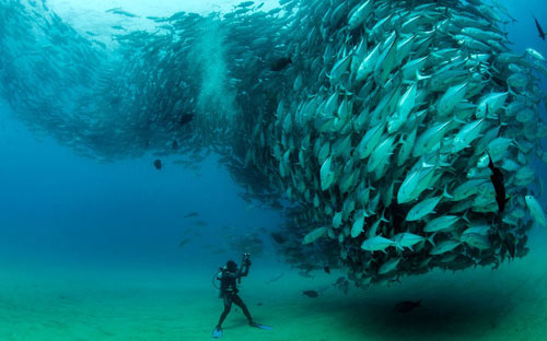 Ảnh đẹp: Đàn cá quây quanh thợ lặn - 6