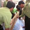 Vụ triệt hạ gỗ sưa ở Quảng Bình: Bất thường