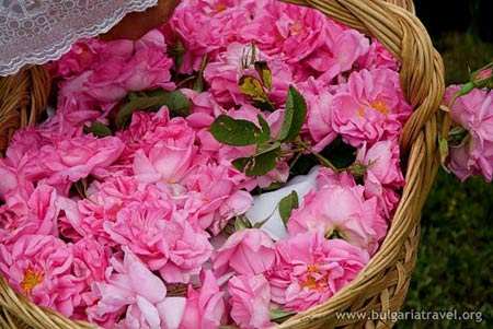 Đắm say trong hương sắc 'xứ sở hoa hồng' - 1