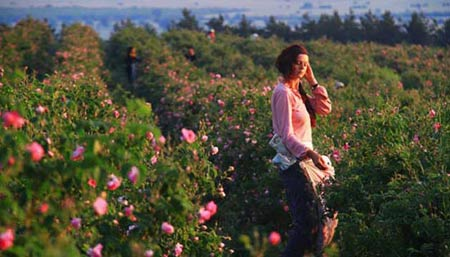 Đắm say trong hương sắc 'xứ sở hoa hồng' - 3