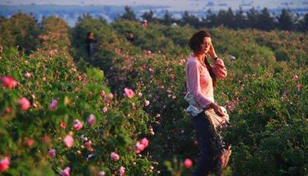 Đắm say trong hương sắc 'xứ sở hoa hồng', Du lịch, xu so hoa hong, nuoc hoa, du lich, du lich viet nam, du lich the gioi, du lich 2013, kinh nghiem du lich, du lich chau au, du lich chau a, kham pha the gioi, dia diem du lich