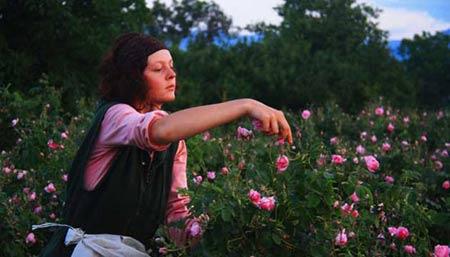 Đắm say trong hương sắc 'xứ sở hoa hồng' - 4