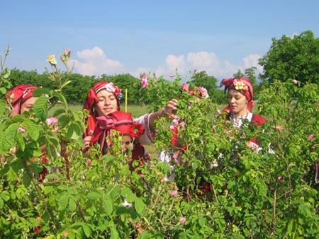Đắm say trong hương sắc 'xứ sở hoa hồng' - 11