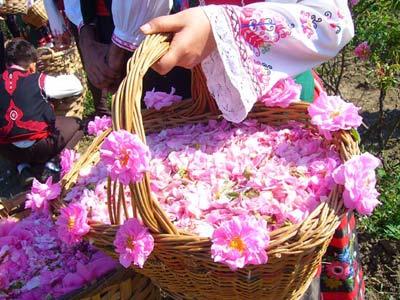 Đắm say trong hương sắc 'xứ sở hoa hồng' - 9