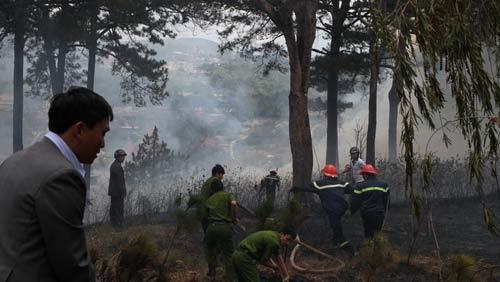 Đà Lạt: Cháy rừng thông trong phố - 3
