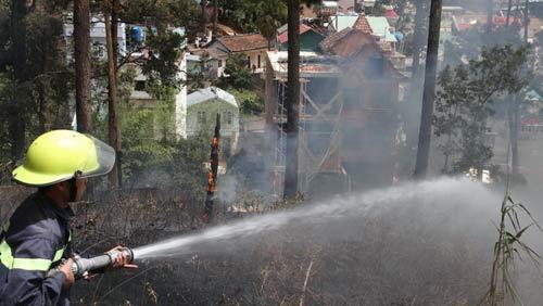 Đà Lạt: Cháy rừng thông trong phố - 2