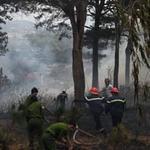 Tin tức trong ngày - Đà Lạt: Cháy rừng thông trong phố