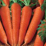 Sức khỏe đời sống - Cà rốt có thực sự giúp giảm cân?