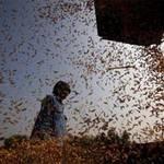 """Thị trường - Tiêu dùng - Thế giới trước nguy cơ """"bội thực"""" gạo"""