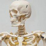 Tin tức trong ngày - Nhật: Sống với bộ xương của mẹ suốt 3 năm