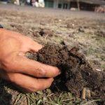 Giám định bùn mía, tìm nguyên nhân TNGT